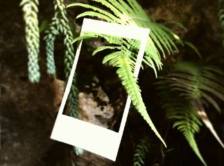 fern green nature frame