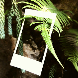 fern green nature frame