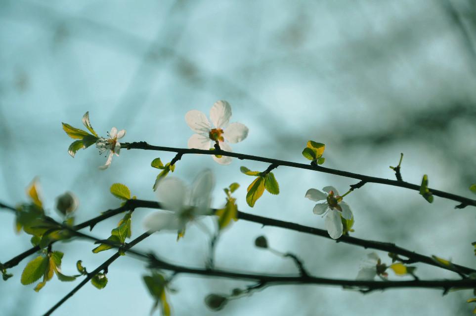 spring...  #art #interesting #nature #photography #spring#springtime#