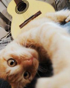 cute petsandanimals guitar cats selfie