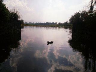 nature petsandanimals mexico lake peace