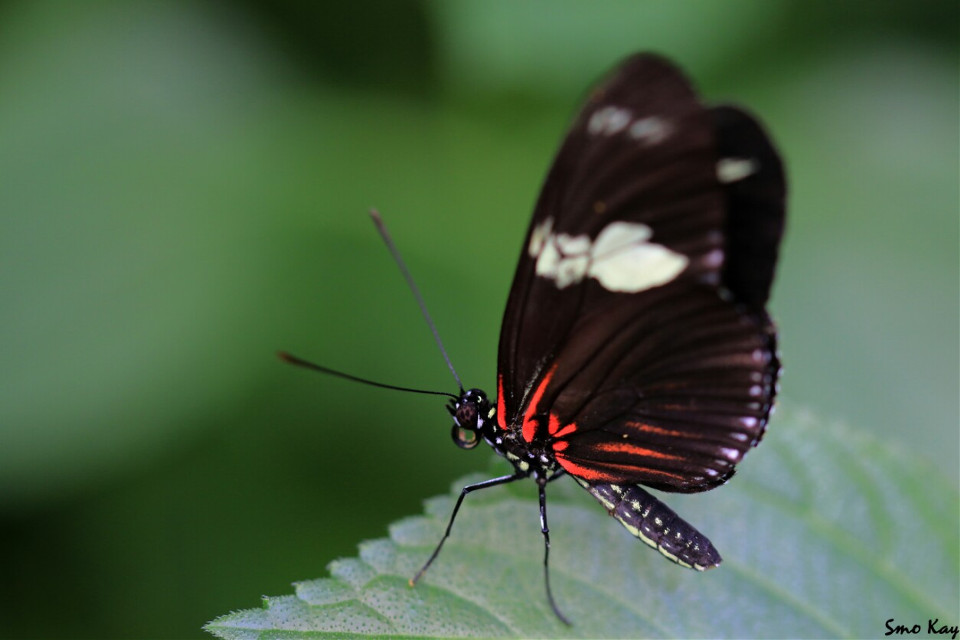 #butterfly #photography #nature #petsandanimals #animals #zoo #colorful #insects #wildlife