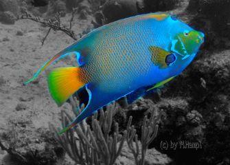 mhnec mexico fish black