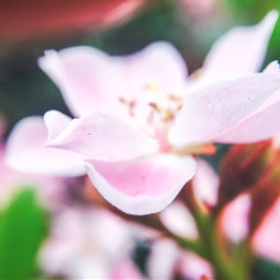 nature flower macrophotography macro softcolors