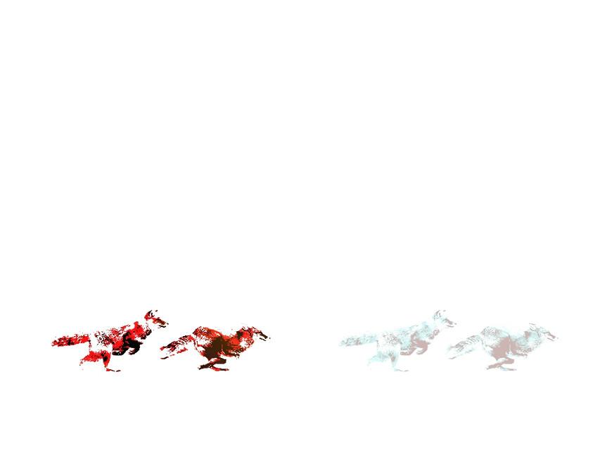 #fox #foto #white  #red #blu #running