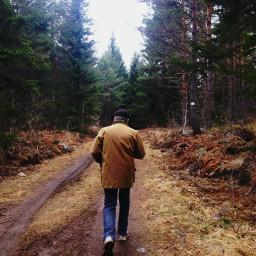 sweden dad nature forest wood
