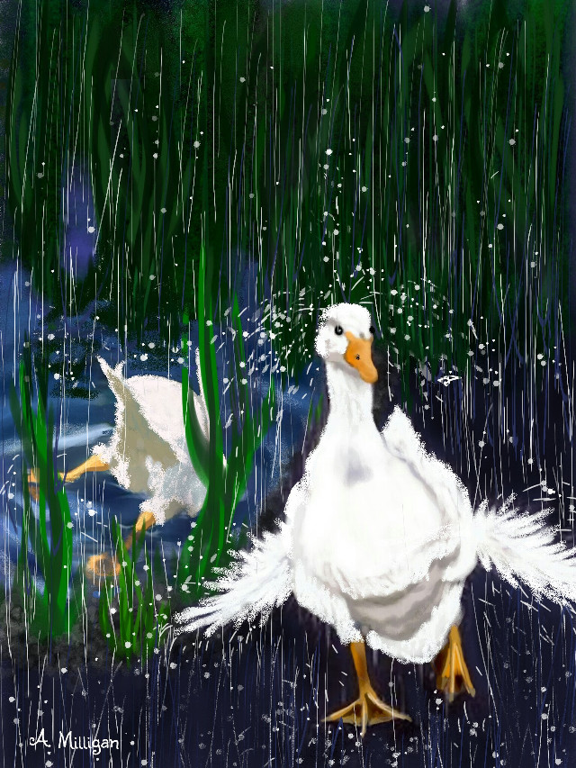 #wdprainyday My first entry for rainyday 😊 A quick step by step guide on my profile page 😆 💚 ❤    #colorful #colorsplash #cute #nature #petsandanimals #rain  #ducks #water  #draw.😊 ❤ 💚