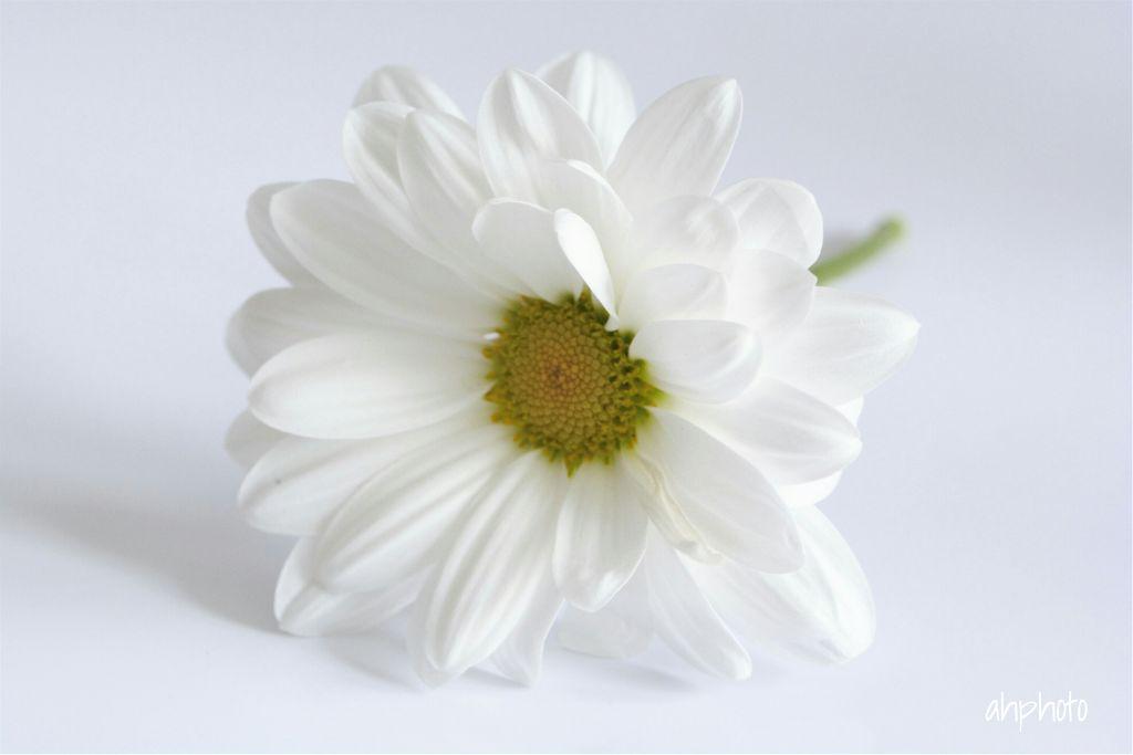 Goodmorning Flower White Minimalism Photography Noedit
