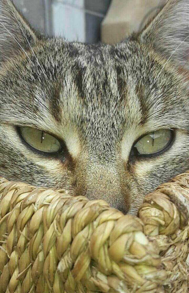 My cat Baghera
