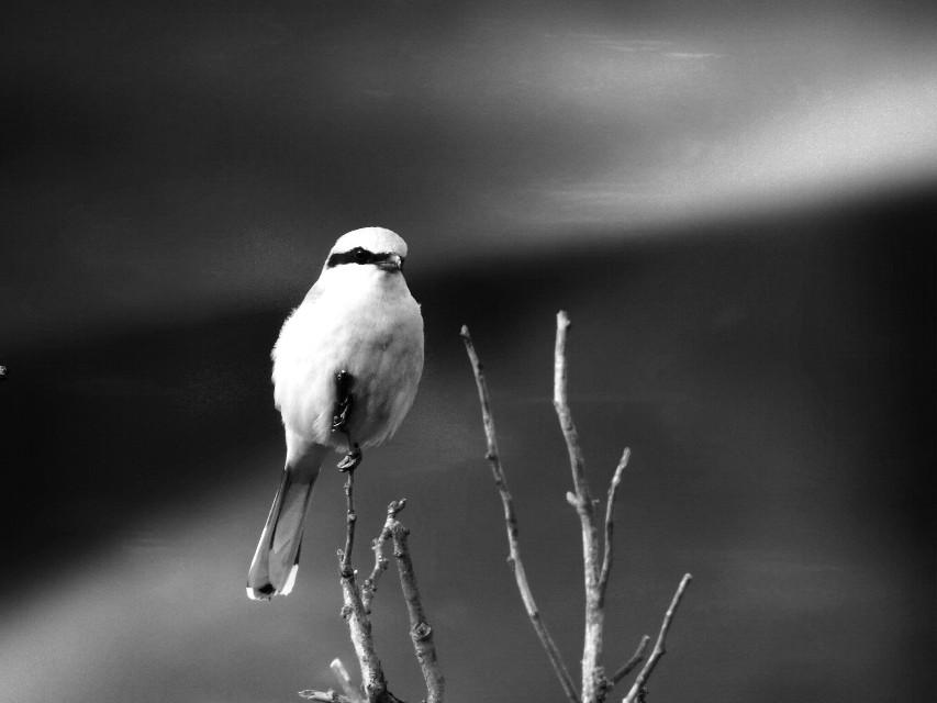 #light  #blackandwhite  #bird