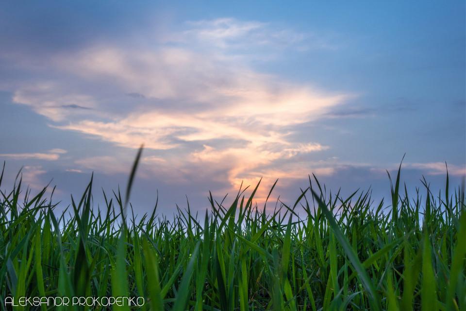 #field #sunset #sky #clouds