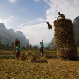 farmlife farm morning rice field