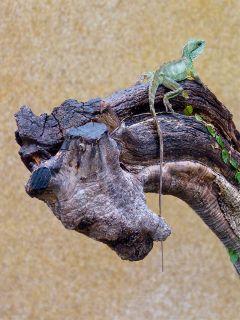 photography petsandanimals dragon nature lafermeauxcrocodiles