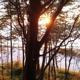 wpptrees nature nofilter noedit trees