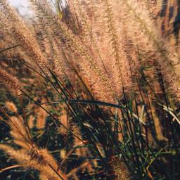 art photography picture picart grasslands