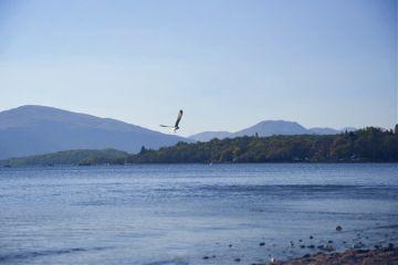 interesting beach nature bird freetoedit