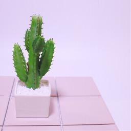 freetoedit plant pink minimal pastel