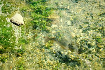 fish fisheye fishing lake lakeside