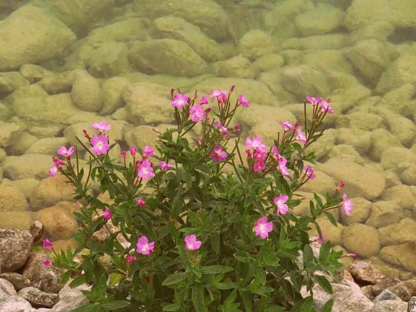 #photography   #flowers #nature #pink #chalklake