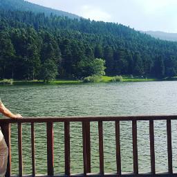 lake forest tree green sky freetoedit