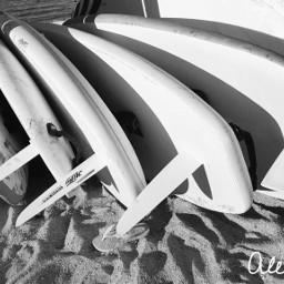 photography blackandwhite windsurf windsurfboards summer