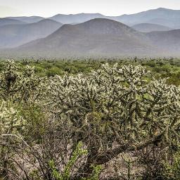 forest enchanting desert schrub mesquite freetoedit