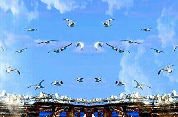 freetoedit birds flock takeoff sky