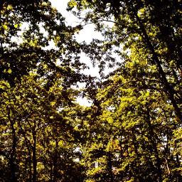 nature wood croatia freetoedit