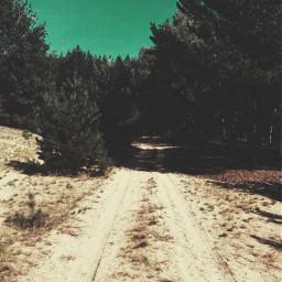 freetoedit forestroad