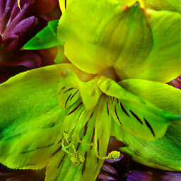 flowerbouquet acmemarket thursdayevening summer god